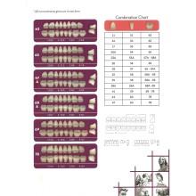 A3-34 Зъбни Гарнитури NT Unay